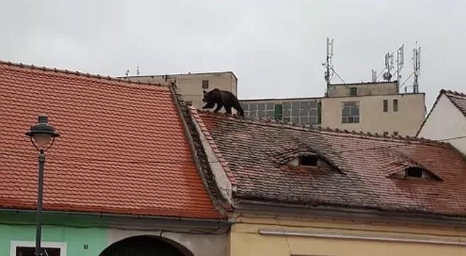 medve-hazteto