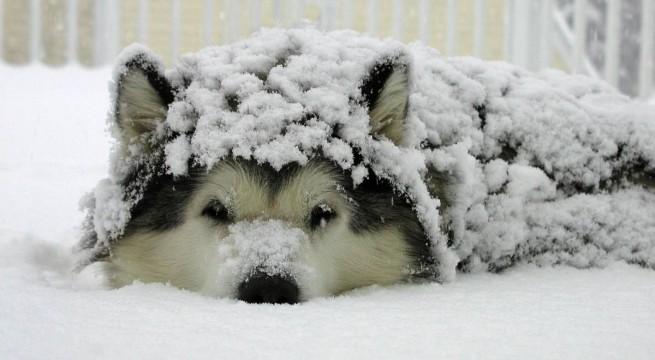 kutya-havas