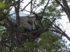 Felszállás közben fennakadt egy fán Zirc határában egy kisrepülő. A két utasa nem sérült meg. Fotó: Krizsán Csaba, MTI