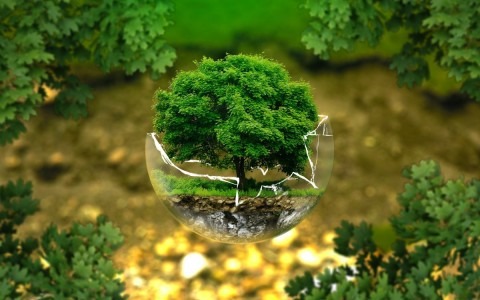 klimakornyezet